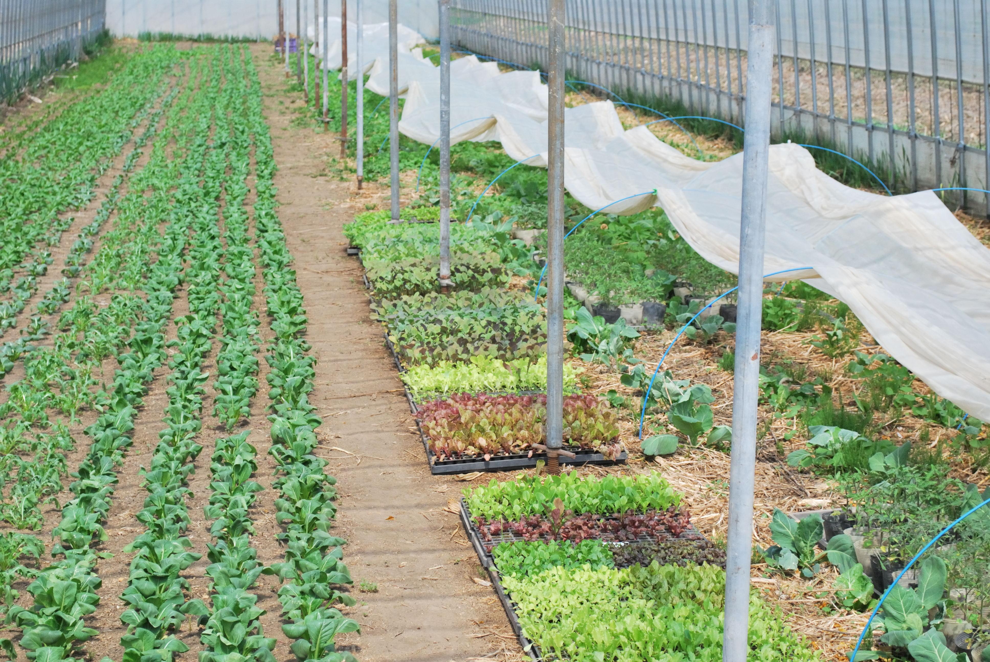 やぶ田ファーム ハウスの野菜たちの様子(2012年5月)