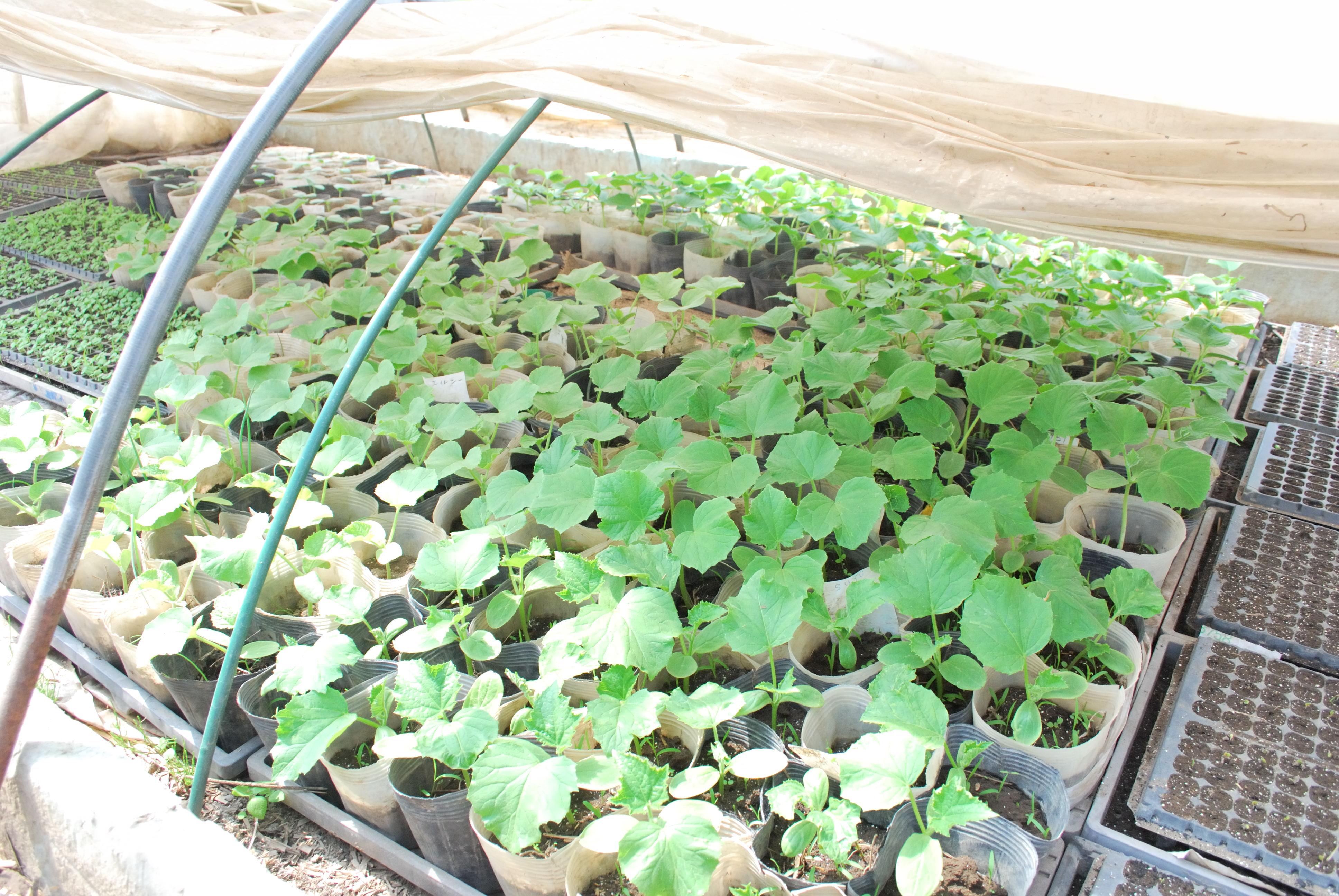 やぶ田ファーム ハウスの野菜の様子(2012年5月)